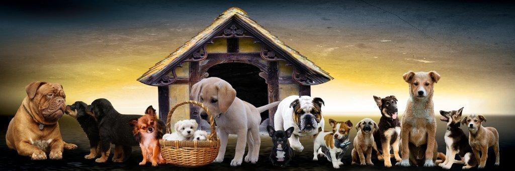 Hund stubenrein,Welpen stubenrein bekommen,Hundetoilette,Toilettenroutine,Toilettentraining,stubenrein,