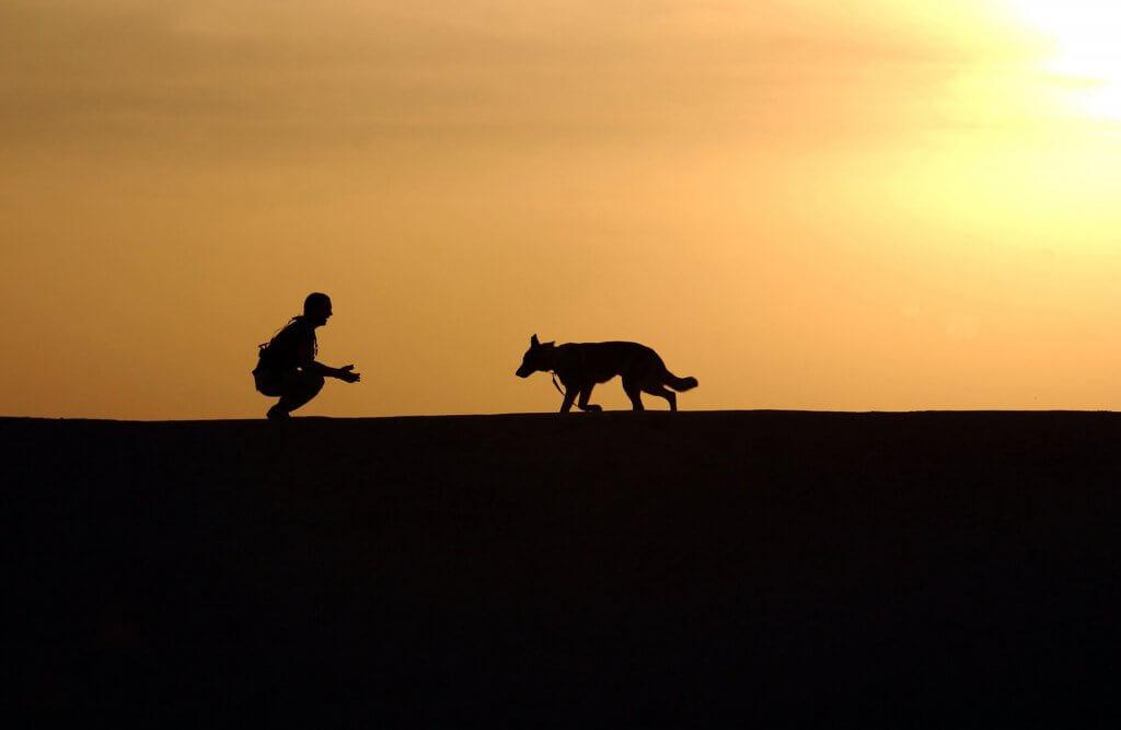 Hundetraining,Hunde ausbilden,positive Verstärkung,Leckerlis,Kommando,Hundeerziehung,